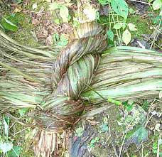 Nettle stems