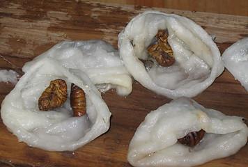 double silk cocoon