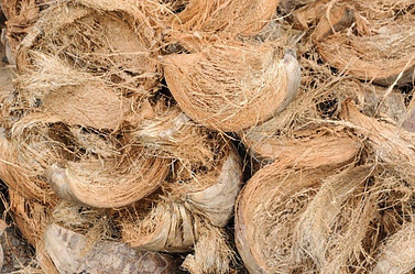 Coconuc husk