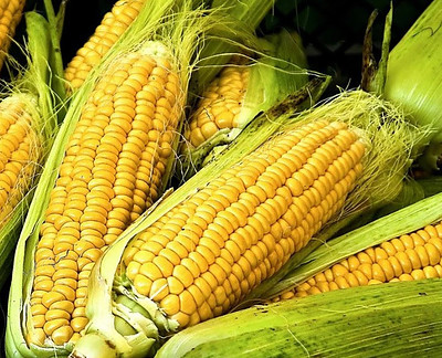 Corn starch polymers from corn kernels