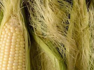 Corn fiber clothing is made with corn fiber