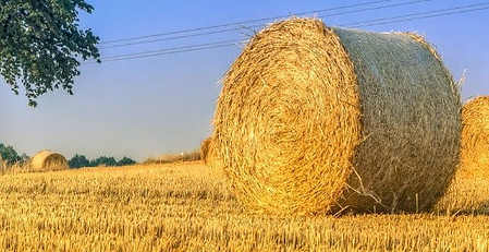 Environmental impact of corn production